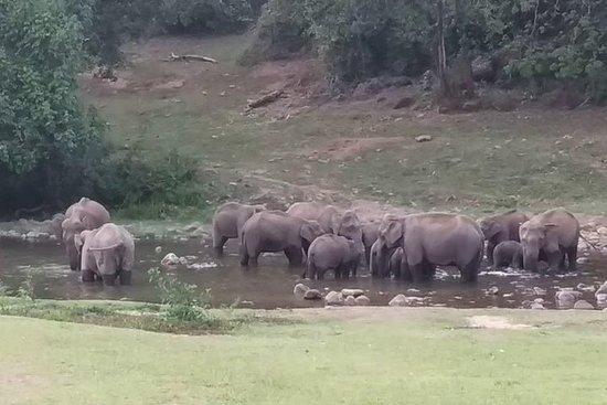 Anakulam Elefante salvaje visitando