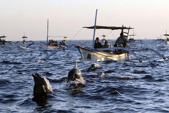 Viagem turística aos golfinhos do norte...