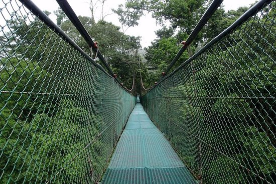 General entrance to the rainforest of...