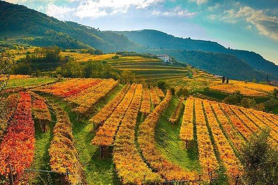 Valpolicella Tour with Amarone Wine Tasting