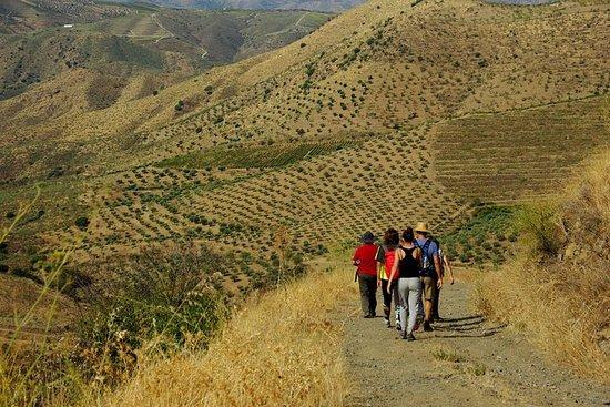Alto Douro Walk & WineTour