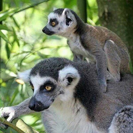 Madagascar Junga Tour