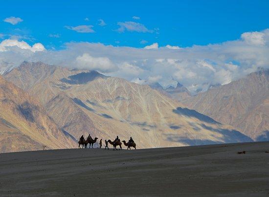 Nubra Valley Camel Sfari