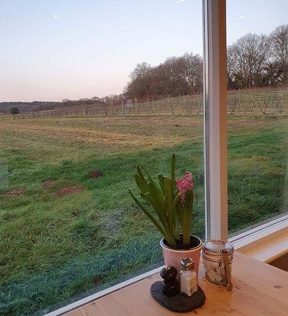 The view from the Tea Barn - right across Durleighmarsh Farm!