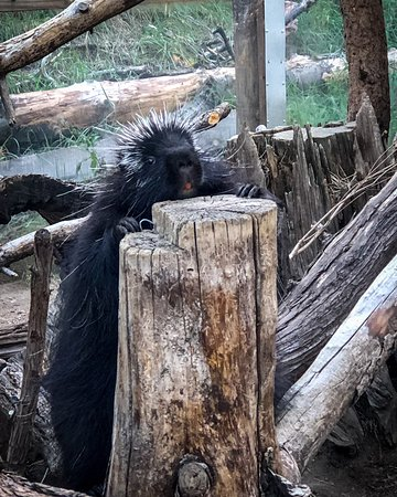 Cheyenne Mountain Zoo (Colorado Springs) : 2020 Ce qu'il ...