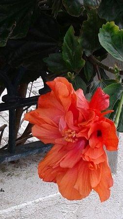 Terceira, Portugal: Orange Delight