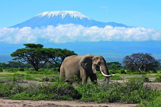 Triumph Travel Kenya