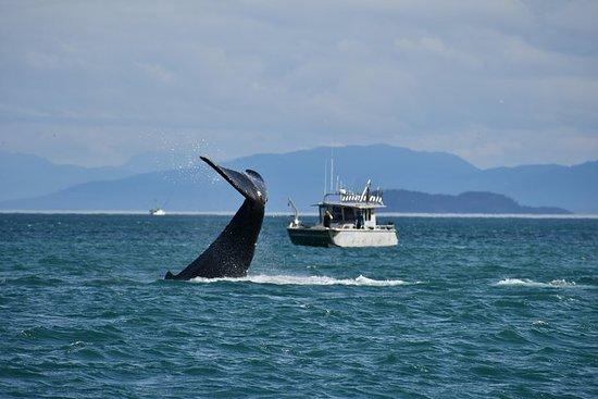 Whale Watching Charters gjennom Icy Strat Alaska
