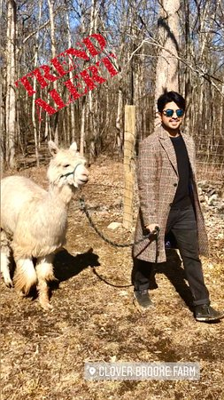 Hudson River Valley, Nova Iorque: Always dapper when wearing your tweed coat and out for a stroll with your alpaca