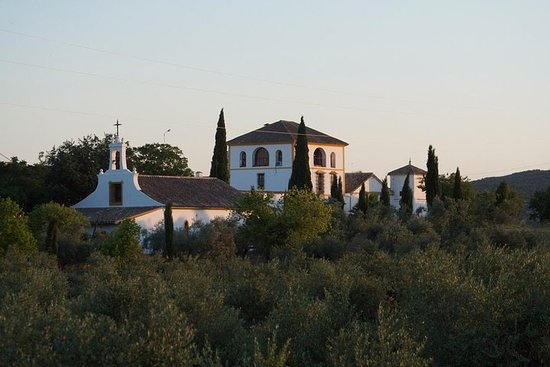 Foto de Tour y degustación de aceite de oliva al mediodía de Córdoba