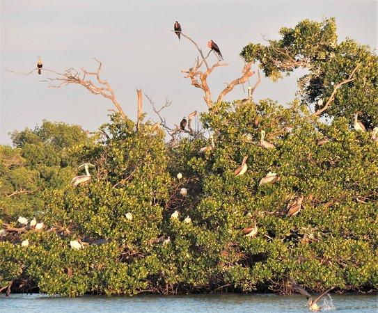 Fort Myers: Bootsfahrt bei Sonnenuntergang: Island of birds