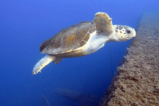 Mergulho em Chipre com Aventuras de...