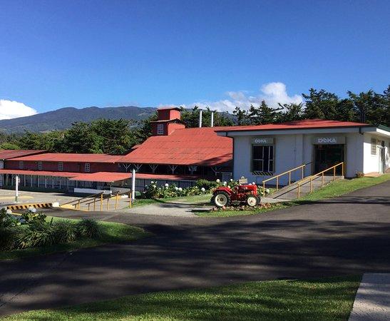 Doka Estate Coffee and Sugar Cane Tour with Butterfly Garden: Doka coffee estate