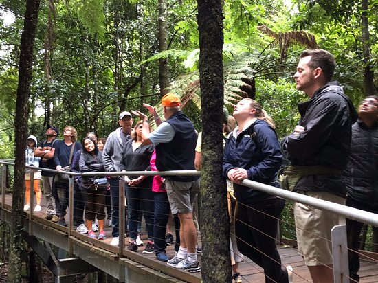 Blue Mountains Foodie, brewery & Winery Tour: Along the walkway of the rain forest and coal mining shafts with Bob our tour guide explaining everything along the way.