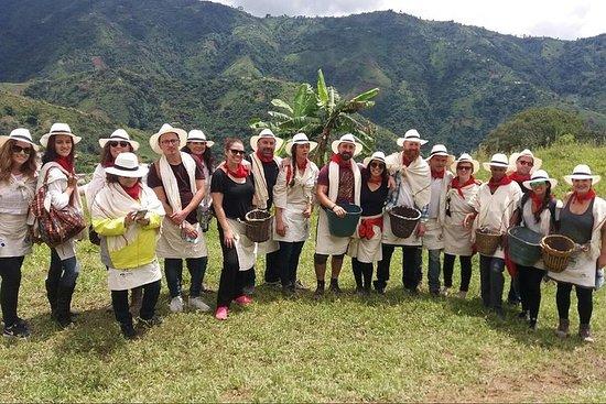 Visite de café à Medellin