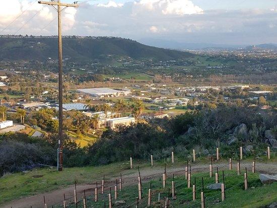 Sunshine Mountain Vineyard