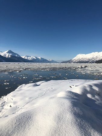 Winter - Wildlife & Turnagain Arm Tour: Waterfront.