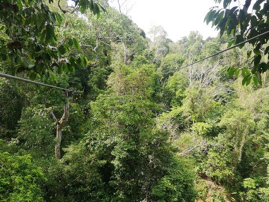 Puerto Jimenes, Коста-Рика: deslizandonos en las copas de los arboles