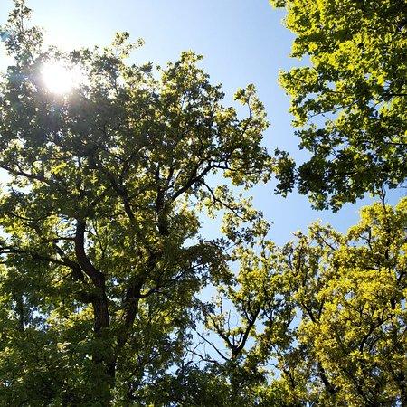 Sur notre terrasse, à l'ombre des chênes ...