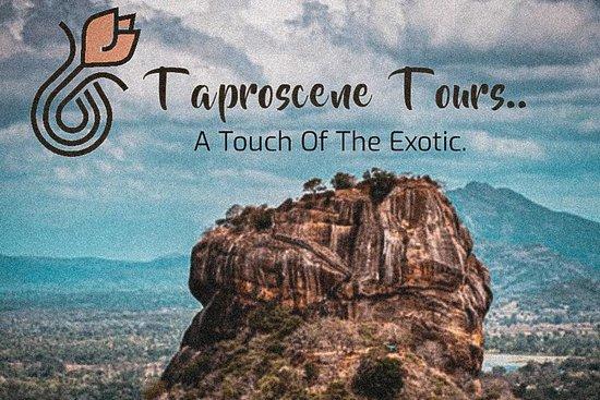 Taproscenes Tours