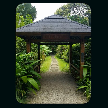 The canopy as you enter