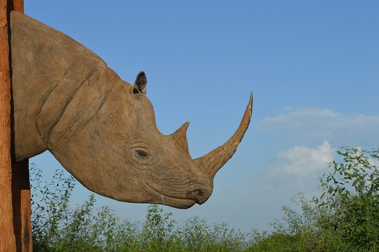 Mkomazi Game Reserve, Tanzanija: Safari