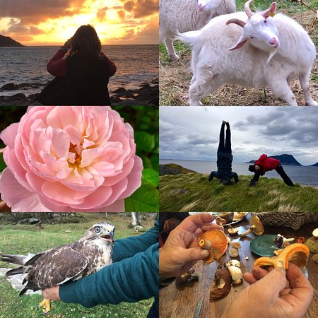 Sunsets like nowhere else, farm animals, heritage roses and a whole array of things to do and see in the municipality of Sande in Møre og Romsdal.