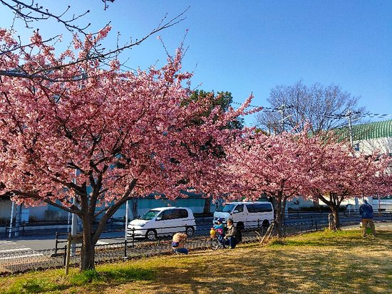 Kanezuka Sakura Square