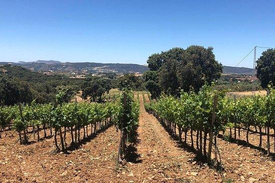 Ronda Full Day Wine Tour desde Marbella