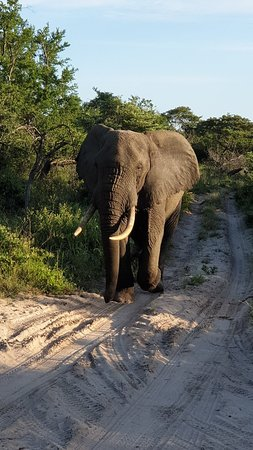 Tembe Elephant Park – fotografija