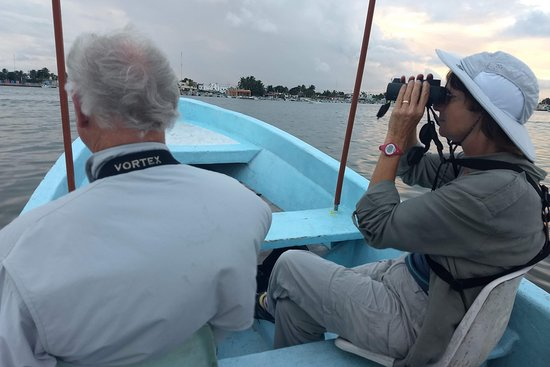 Birding in the Yucatan with local guides