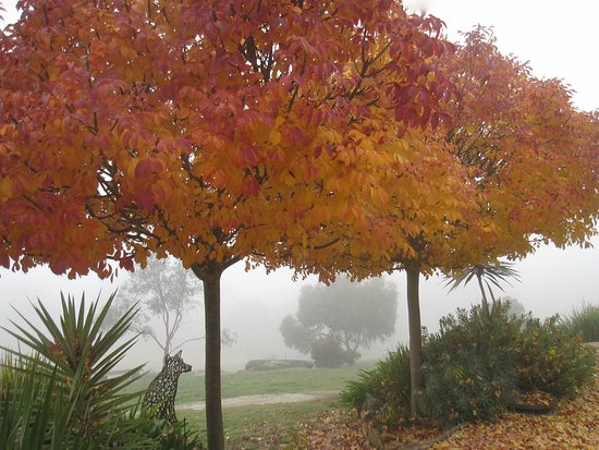 Mica Grange Garden: A foggy morning during Autumn
