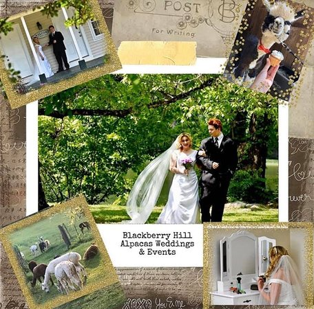 Blackberry Hill Alpacas Weddings and Events