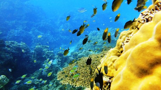 Farasan, Saudi Arabia: صور من أعماق البحر الأحمر - جنوب المملكة العربية السعودية ، منطقة جازان و جزيرة فرسان