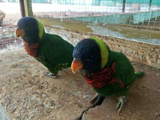 CuCkoo Birds Park