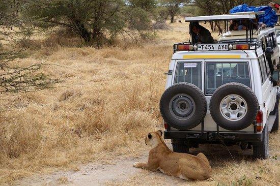 Seko Safaris