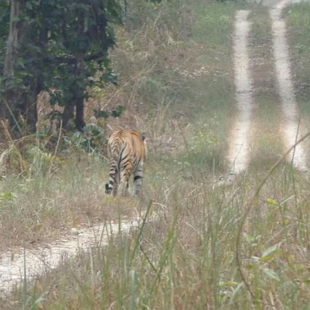 Madi, Непал: 3 days jungle walk