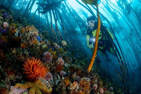Pisces Divers
