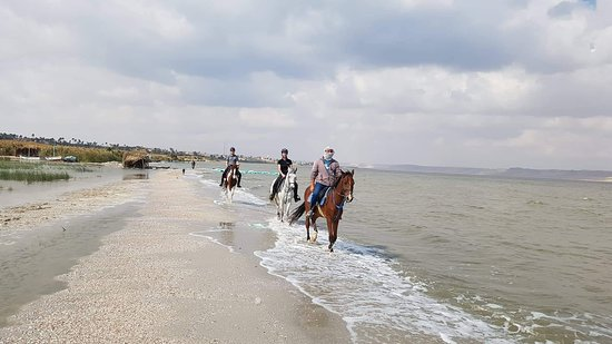 Мухафаза Эль-Файюм, Египет: Horseback riding with Stable Tunis in Tunis Village Fayoum. A unique experience riding along the lake and in the desert! Mohammed Salah and his team take very good care of the horses and make the horseriding trip an unique experience you never forget. For all type of riders, special care for children and beginners.