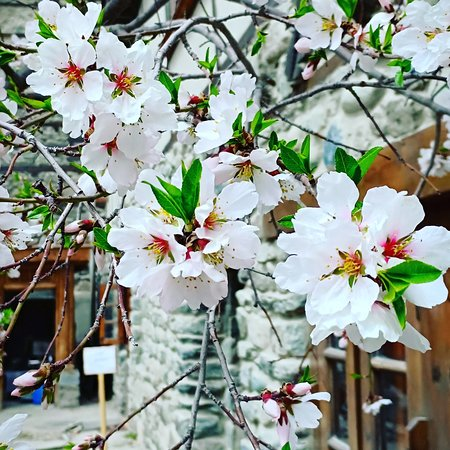 Shigar, Pakistan: Its time for spring in Baltistan Pakistan.