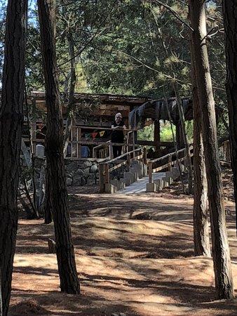 El Totoral, Чили: Bosque