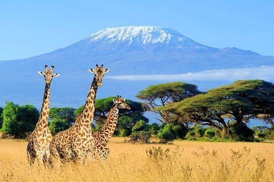Tanzania Focus Adventure