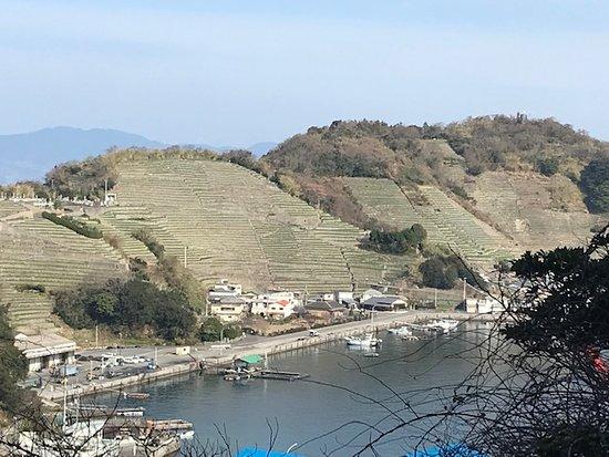 Uwajima, Japonsko: 現地に行く前に目にする開墾された急斜面