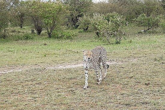 Safari in famiglia di 12 giorni in