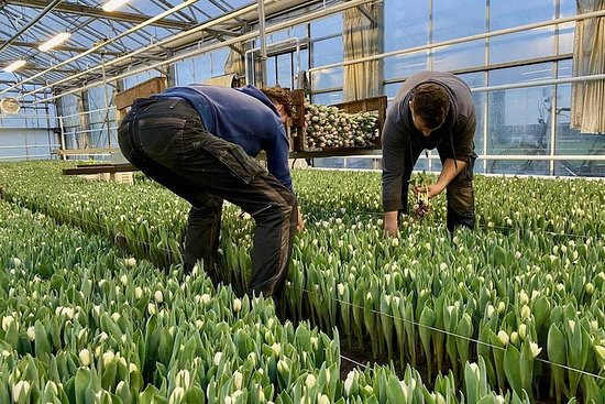 Tulip Farms & Keukenhof - Private ...