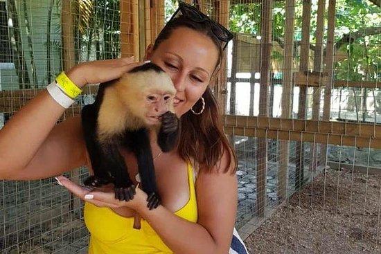 Monkeys et Sloth + Beach Break