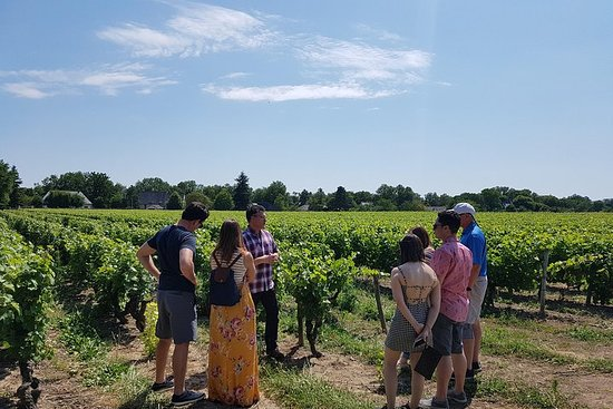 Vintur med liten gruppe fra byen Tours til Loire-dalen