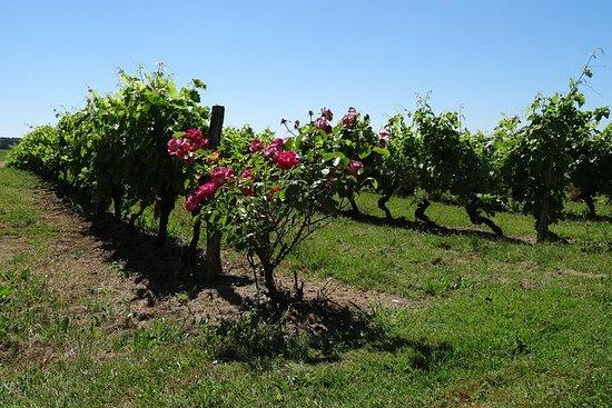 PRIVAT Transfer fra Angouleme til Bordeaux Crossing Cognac country