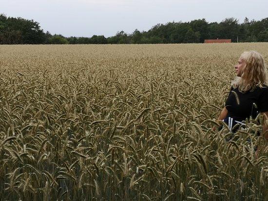 Skarrild, Дания: Dansk natur