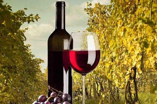 Visite guidée d'une demi-journée dans un vignoble de Madrid